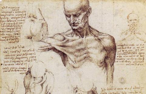 anatomiaLeonardo